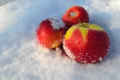 Äpplen i snön Royaltyfri Bild