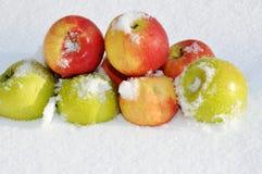 Äpplen i snön Royaltyfria Bilder
