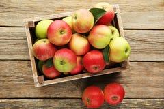 Äpplen i spjällåda Royaltyfri Bild