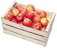 Äpplen i träask royaltyfria foton