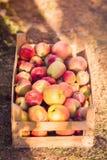 Äpplen i träspjällådabakgrund arkivfoto