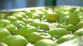 Äpplen i vattnet lager videofilmer