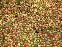 Äpplen i vattnet Arkivfoton