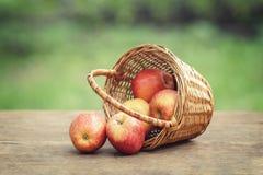 Äpplen i vide- korg på tabellen Arkivfoto
