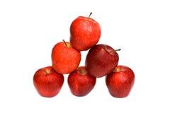 äpplen isolerade röd white Fotografering för Bildbyråer