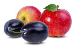 äpplen isolerade vita plommoner Royaltyfri Fotografi