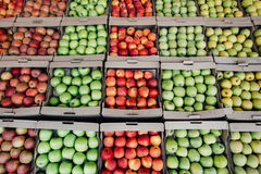 äpplen många äppletextur seamless äpple äpplen stänger sig upp Royaltyfri Fotografi