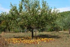 äpplen malande yellow Arkivbilder