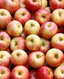 äpplen market red Royaltyfri Fotografi