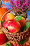Äpplen med vattendroppar i korgen Arkivbild
