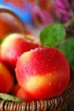 Äpplen med vattendroppar i korgen Royaltyfri Foto