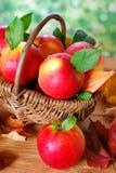 Äpplen med vattendroppar i korgen Arkivfoto