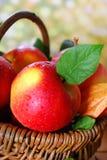 Äpplen med vattendroppar i korgen Royaltyfria Bilder