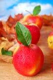 Äpplen med vattendroppar på hösttabellen Royaltyfri Bild
