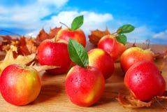 Äpplen med vattendroppar på hösttabellen Fotografering för Bildbyråer