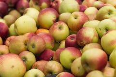 äpplen mycket Arkivfoto