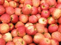 äpplen New Zealand royaltyfri bild