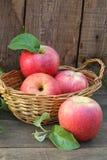 Äpplen Nya äpplen på trätabellen Arkivfoton