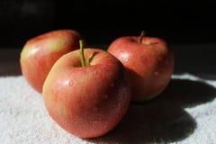 äpplen nya tre Fotografering för Bildbyråer