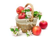 Äpplen och Apple-trädet blommar på vit bakgrund Arkivfoto