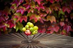 Äpplen och färgade sidor Arkivfoto