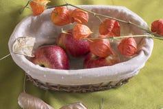 Äpplen och hösten blommar i en breadbox Arkivbild