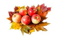 Äpplen och isolerade höstsidor Royaltyfri Foto