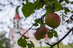 Äpplen och kyrka Royaltyfria Bilder