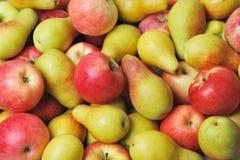 Äpplen och pears Royaltyfri Fotografi