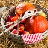 Äpplen och pumpor fotografering för bildbyråer