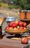 Äpplen och skörd Arkivfoton