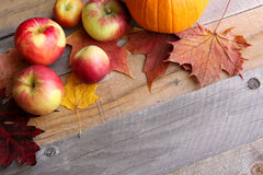 Äpplen och Sugar Maple Leaves Bordering Rustic träbakgrund Fotografering för Bildbyråer