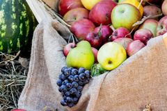 Äpplen päron, druvor på en kanfas som göras av sackcloth_ arkivbild