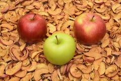 Äpplen på bakgrunden av torkade äpplen Royaltyfria Bilder