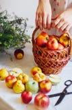 Äpplen på den vita tabellen Söta äpplen på tabellen på ljus backgrou Arkivbilder