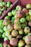 Äpplen på Detering av lantgården i Eugene Oregon royaltyfri fotografi