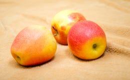 Äpplen på en beige bakgrund Royaltyfri Foto