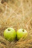 Äpplen på gult gräs Arkivfoto