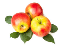 Äpplen på leaves Royaltyfria Bilder