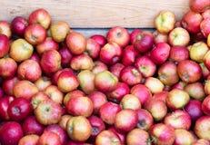 Äpplen på marknad Royaltyfri Bild