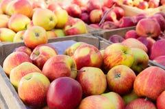Äpplen på marknad Fotografering för Bildbyråer