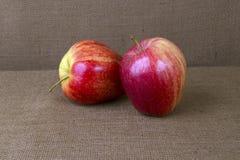 Äpplen på säckväv Arkivfoton