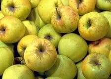 Äpplen på skärm Royaltyfria Bilder