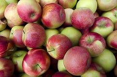 Äpplen på skörden Royaltyfri Bild
