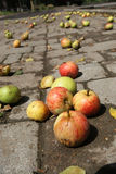 Äpplen på vägen Royaltyfria Foton