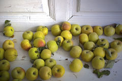 Äpplen på verandan Arkivbilder
