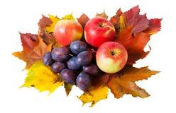 Äpplen, plommoner och isolerade höstsidor Royaltyfri Fotografi