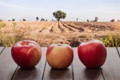 Äpplen som är nya på trägolv Royaltyfri Foto