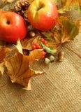 äpplen torkar att plundra för leafs Arkivfoton