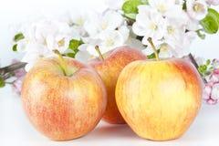 äpplen tre Fotografering för Bildbyråer